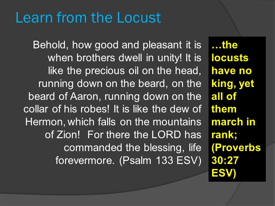 Learn from the Locust Behold, how good and pleasant it is when brothers dwell in unity!It is like the precious oil on the head, running down on the be
