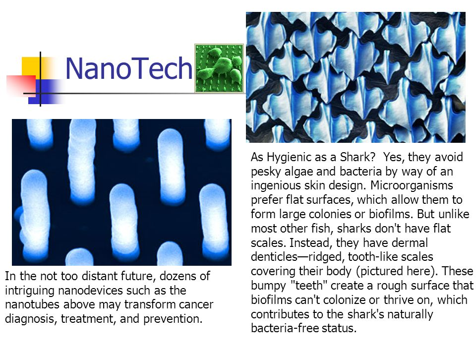 NanoTech As Hygienic as a Shark? Yes, they avoid pesky algae and bacteria by way of an ingenious skin design. Microorganisms prefer flat surfaces, whi
