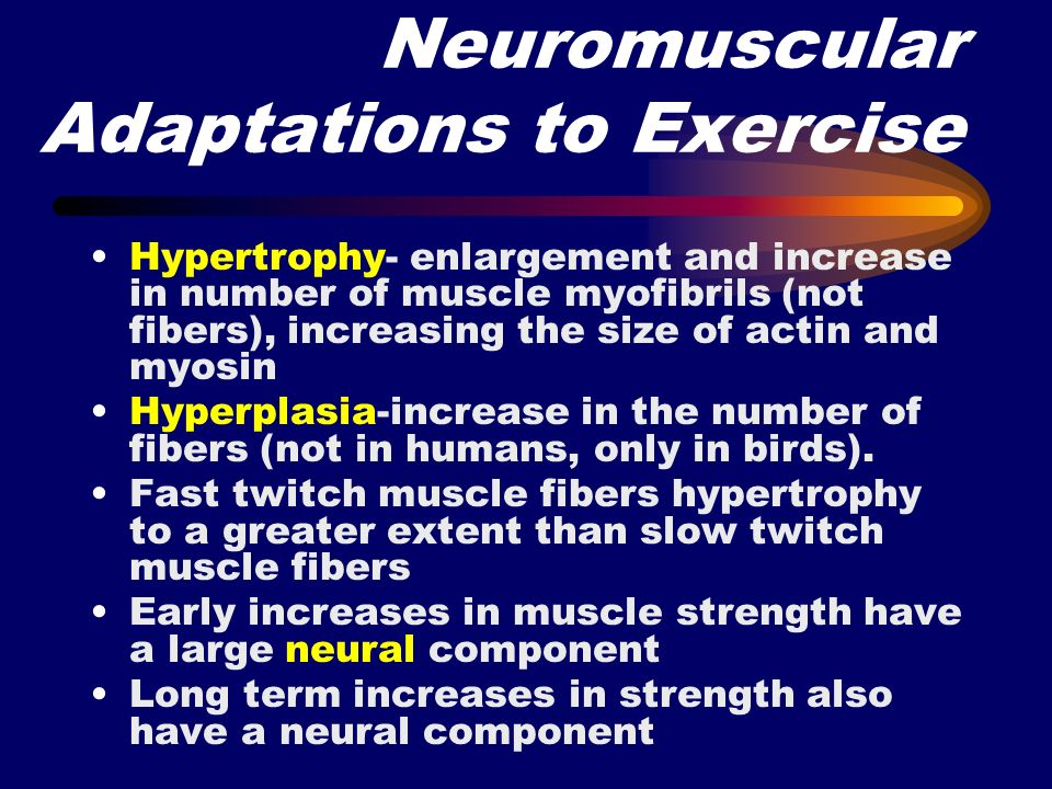 Neuromuscular Adaptations to Exercise Hypertrophy- enlargement and increase in number of muscle myofibrils (not fibers), increasing the size of actin