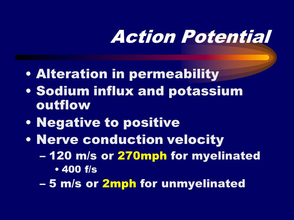 Action Potential Alteration in permeability Sodium influx and potassium outflow Negative to positive Nerve conduction velocity –120 m/s or 270mph for