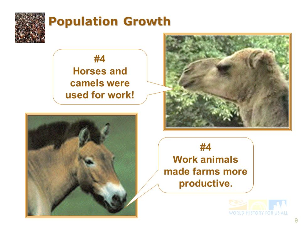 9 #4 Horses and camels were used for work! #4 Work animals made farms more productive. Population Growth