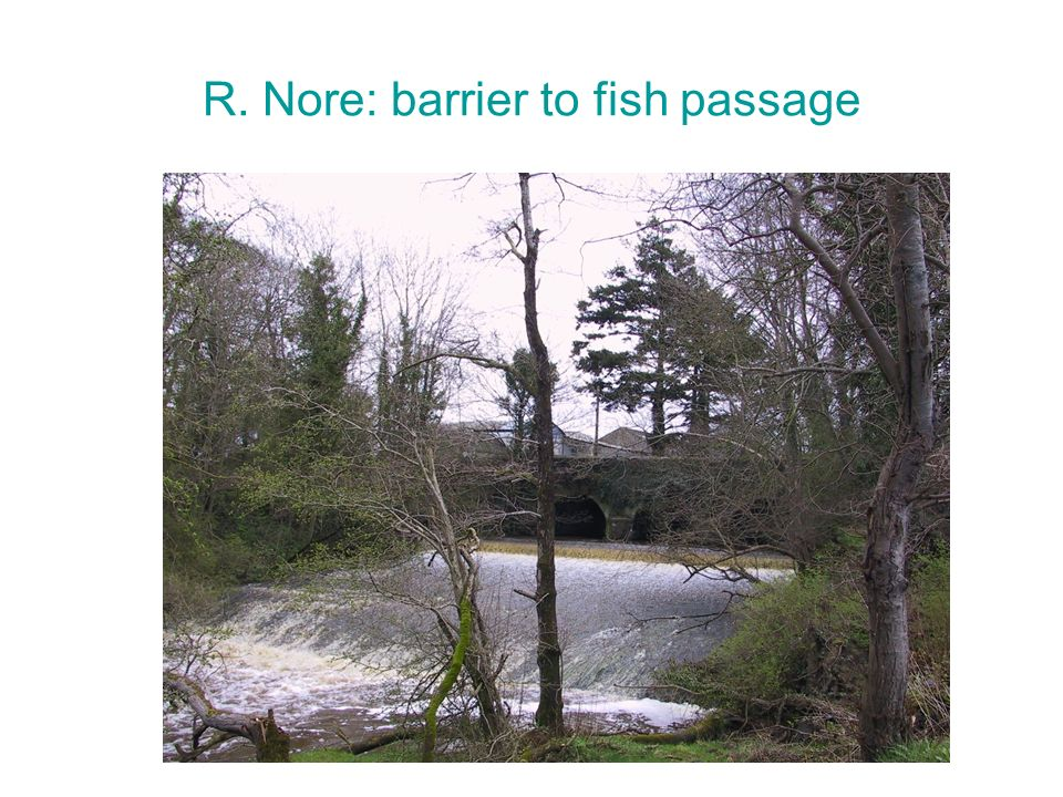R. Nore: barrier to fish passage