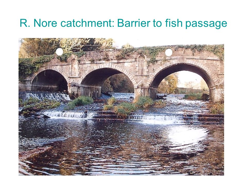 R. Nore catchment: Barrier to fish passage
