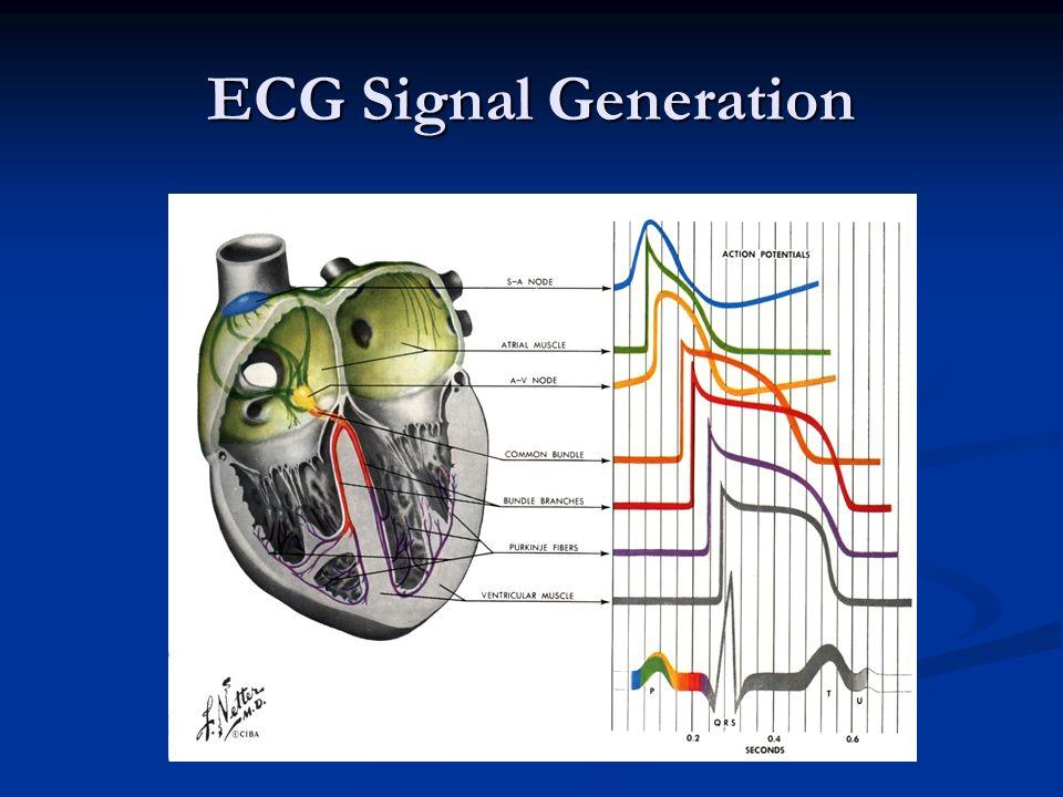 ECG Signal Generation