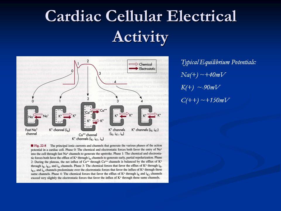 Cardiac Cellular Electrical Activity Typical Equilibrium Potentials: Na(+) ~+40mV K(+) ~-90mV C(++) ~+150mV