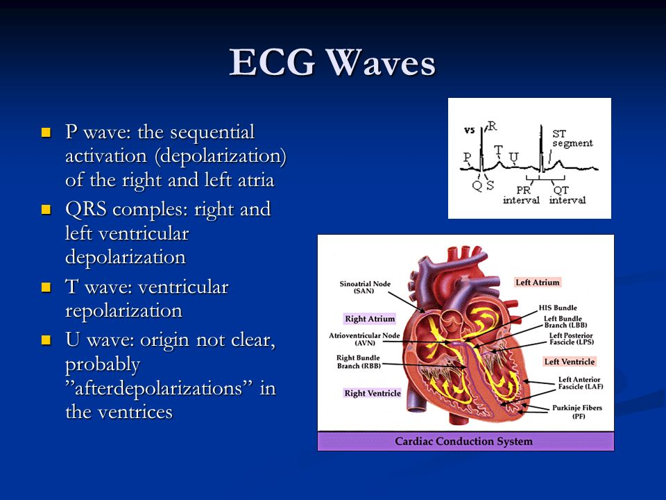 ECG Waves P wave: the sequential activation (depolarization) of the right and left atria P wave: the sequential activation (depolarization) of the rig