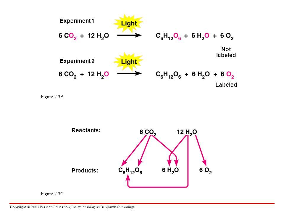 Copyright © 2003 Pearson Education, Inc. publishing as Benjamin Cummings Figure 7.3B Figure 7.3C Experiment 1 Experiment 2 Not labeled Labeled Reactan
