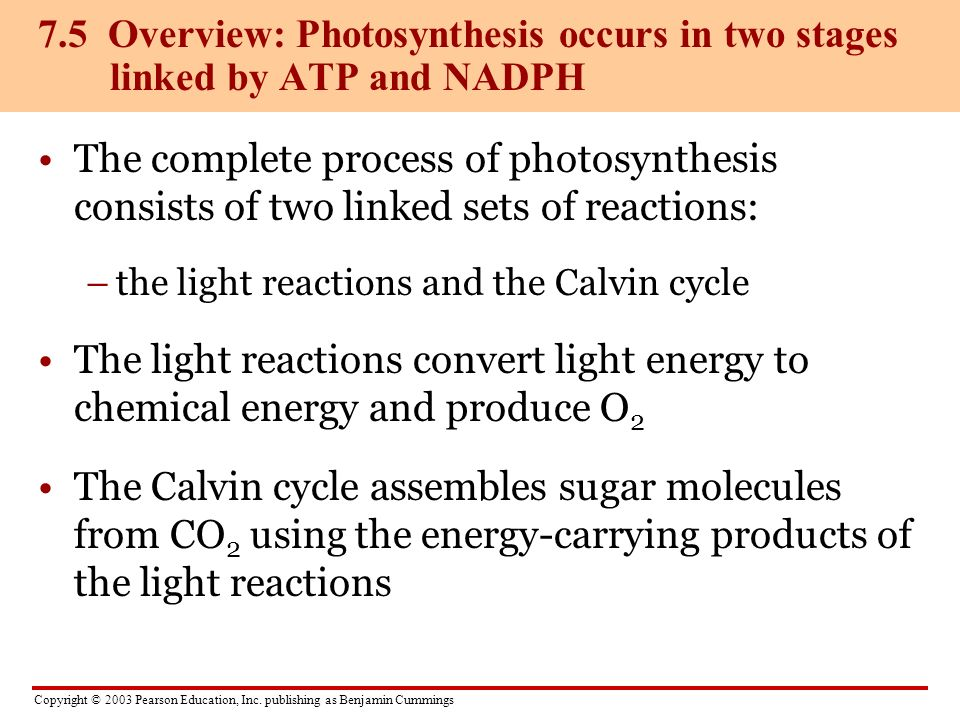 Copyright © 2003 Pearson Education, Inc. publishing as Benjamin Cummings The complete process of photosynthesis consists of two linked sets of reactio