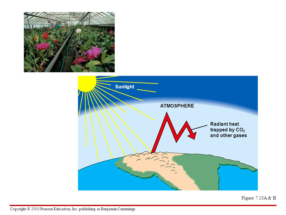 Copyright © 2003 Pearson Education, Inc. publishing as Benjamin Cummings Figure 7.13A & B Sunlight ATMOSPHERE Radiant heat trapped by CO 2 and other g