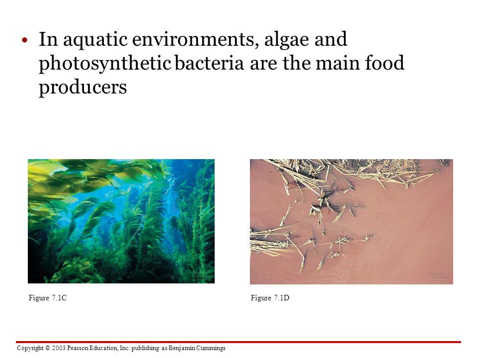 Copyright © 2003 Pearson Education, Inc. publishing as Benjamin Cummings In aquatic environments, algae and photosynthetic bacteria are the main food