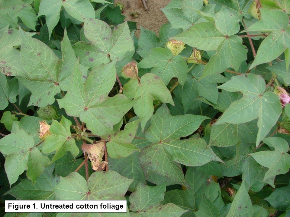Figure 1. Untreated cotton foliage