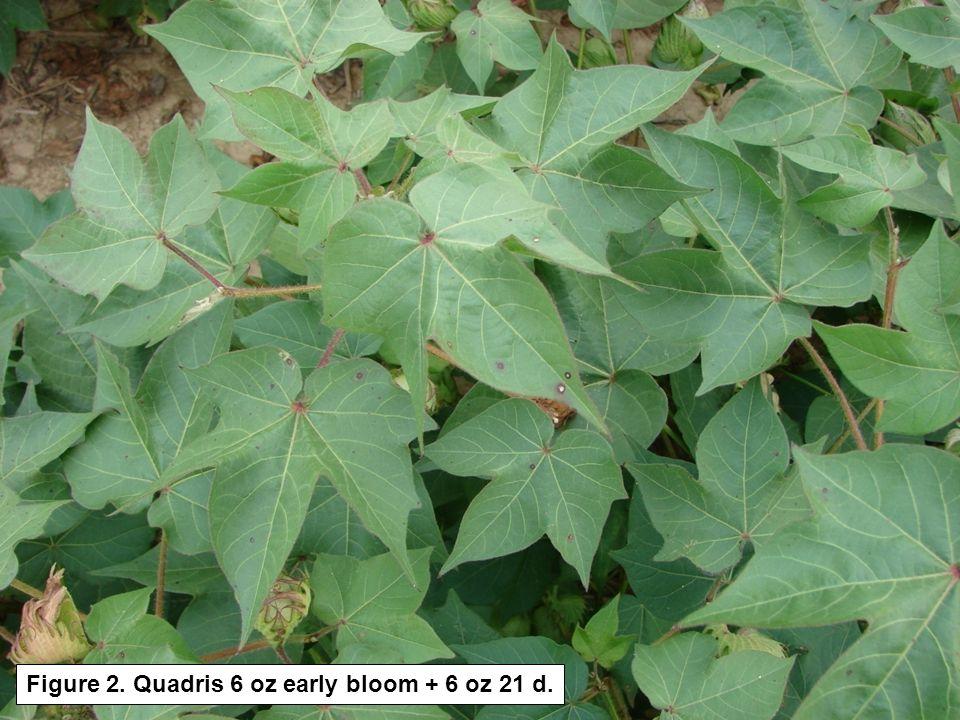 Figure 2. Quadris 6 oz early bloom + 6 oz 21 d.