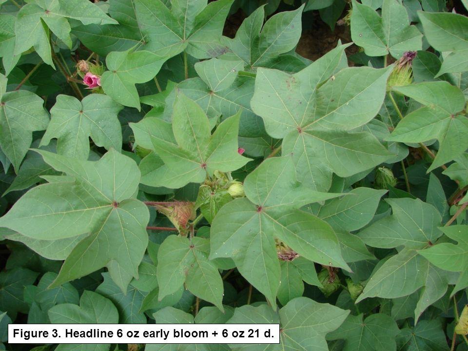 Figure 3. Headline 6 oz early bloom + 6 oz 21 d.