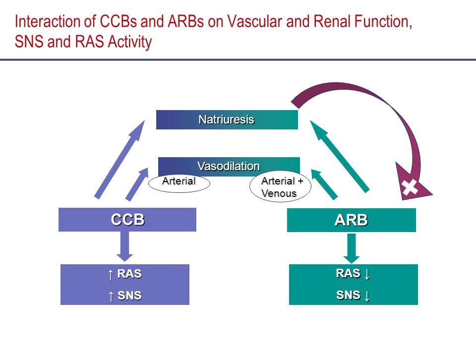 Interaction of CCBs and ARBs on Vascular and Renal Function, SNS and RAS Activity CCB ARB Vasodilation Natriuresis Arterial Arterial + Venous RAS RAS
