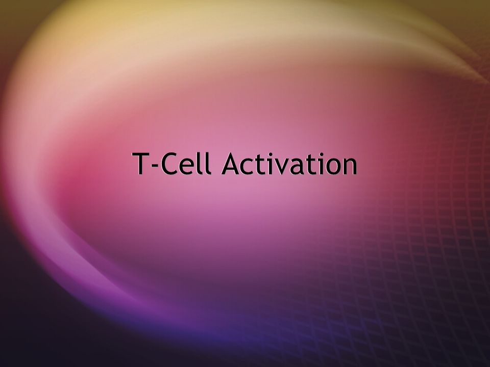 T-Cell Activation