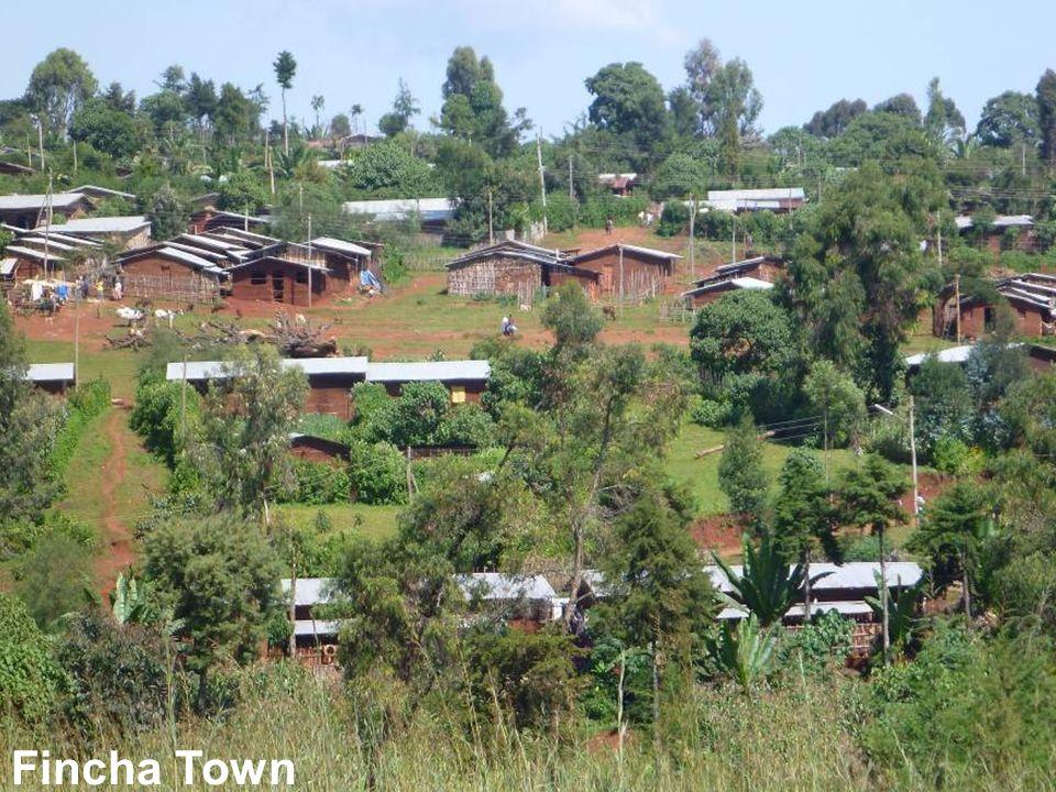 Fincha Town