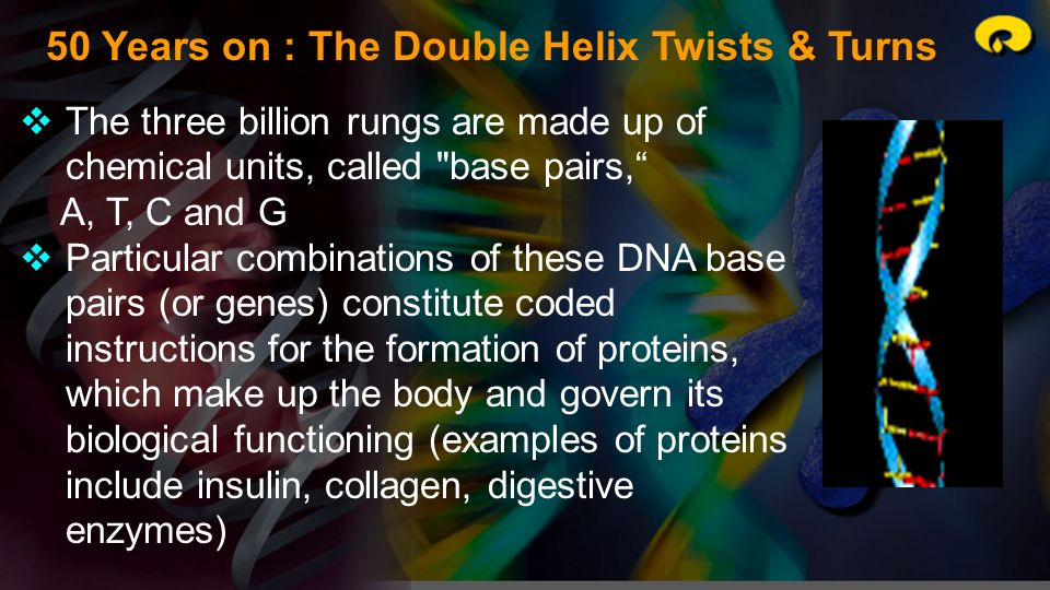 50 Years on : The Double Helix Twists & Turns The three billion rungs are made up of chemical units, called