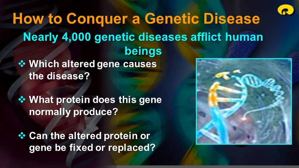 How to Conquer a Genetic Disease Nearly 4,000 genetic diseases afflict human beings Which altered gene causes the disease? Which altered gene causes t