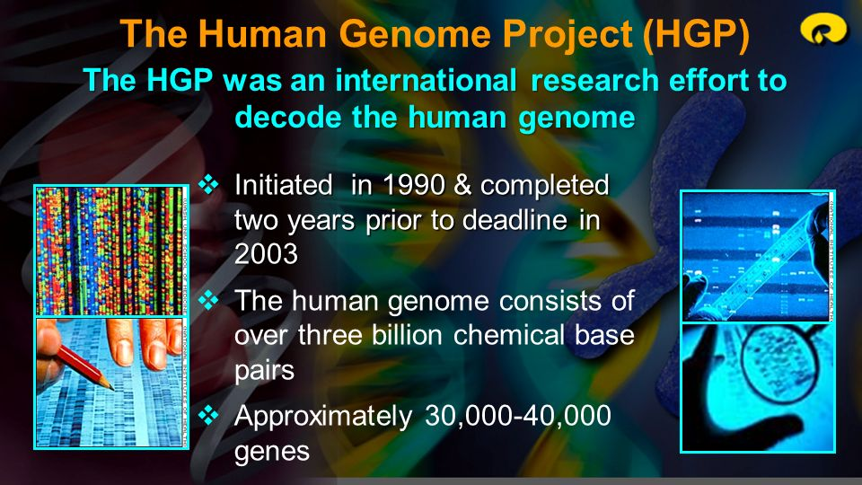 The Human Genome Project (HGP) The HGP was an international research effort to decode the human genome Initiated in 1990 & completed two years prior t