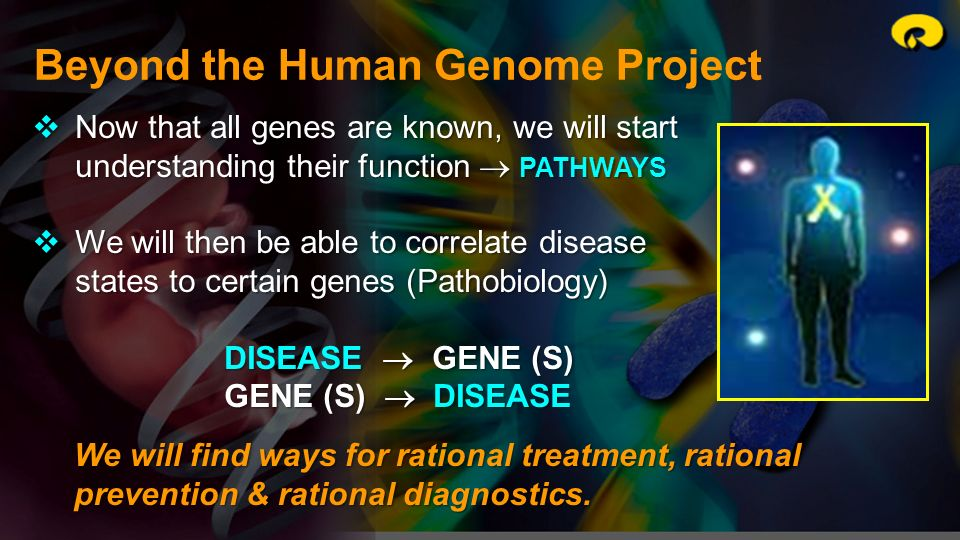 Beyond the Human Genome Project We will find ways for rational treatment, rational prevention & rational diagnostics. Now that all genes are known, we