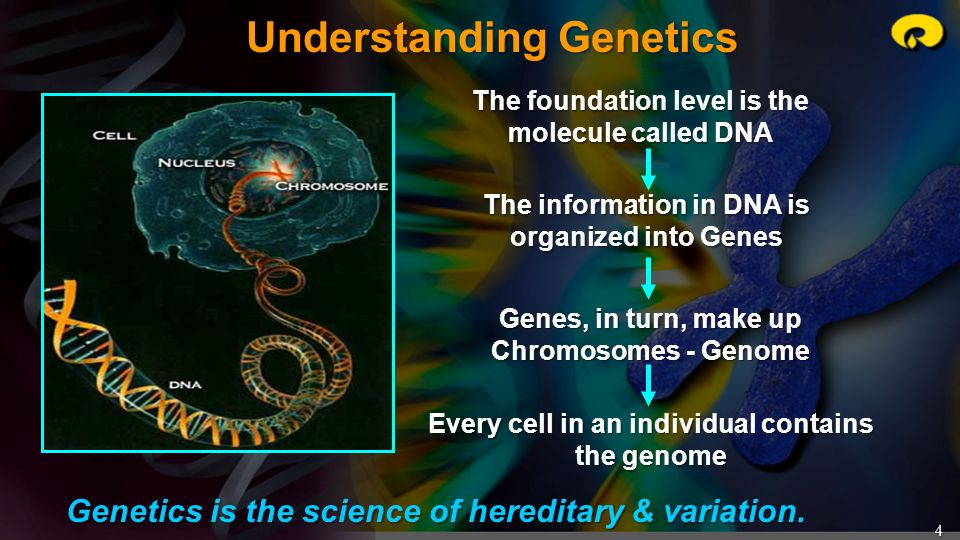 4 Understanding Genetics Genetics is the science of hereditary & variation. The foundation level is the molecule called DNA The information in DNA is