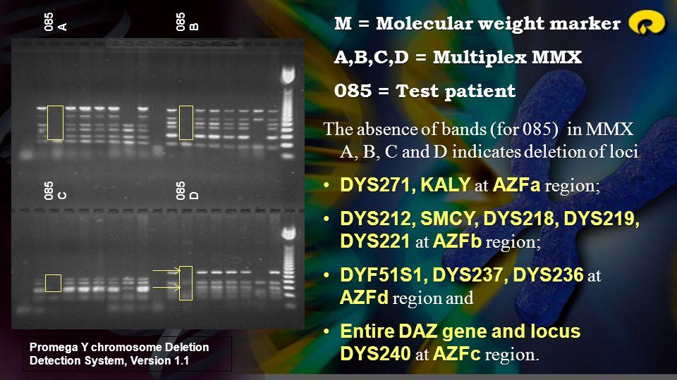 085 A 085 B 085 C 085 D The absence of bands (for 085) in MMX A, B, C and D indicates deletion of loci DYS271, KALY at AZFa region;DYS271, KALY at AZF