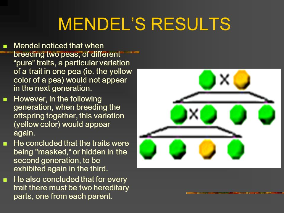 MENDELS RESULTS Mendel noticed that when breeding two peas, of different pure traits, a particular variation of a trait in one pea (ie. the yellow col