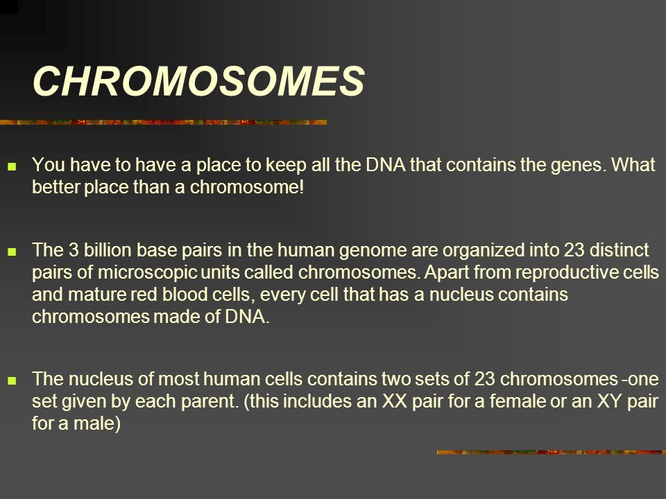 CHROMOSOMES You have to have a place to keep all the DNA that contains the genes. What better place than a chromosome! The 3 billion base pairs in the