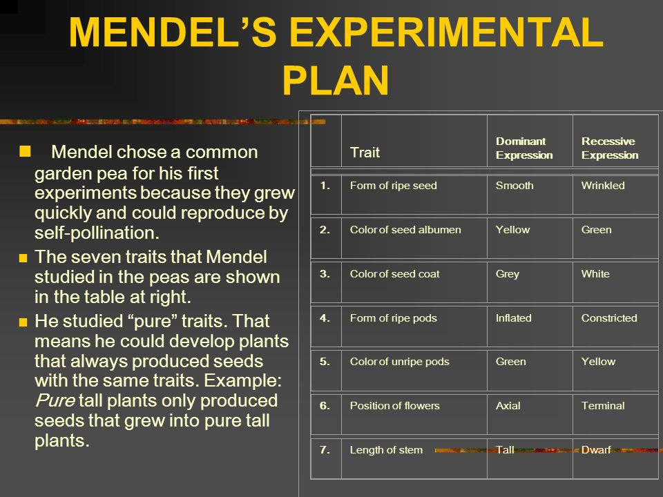 MENDELS EXPERIMENTAL PLAN Mendel chose a common garden pea for his first experiments because they grew quickly and could reproduce by self-pollination
