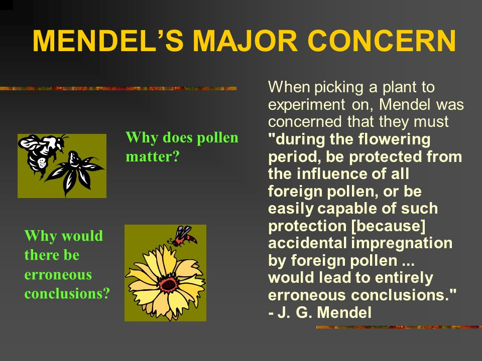 MENDELS MAJOR CONCERN When picking a plant to experiment on, Mendel was concerned that they must