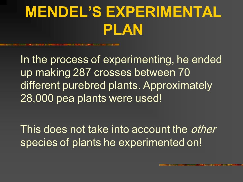 MENDELS EXPERIMENTAL PLAN In the process of experimenting, he ended up making 287 crosses between 70 different purebred plants. Approximately 28,000 p