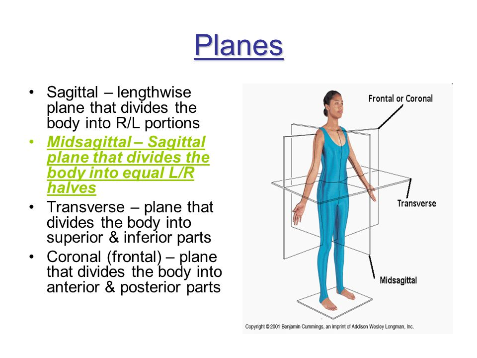 Planes Sagittal – lengthwise plane that divides the body into R/L portions Midsagittal – Sagittal plane that divides the body into equal L/R halves Tr
