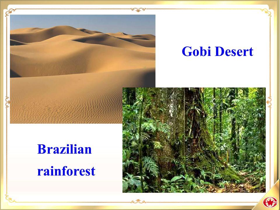 Gobi Desert Brazilian rainforest