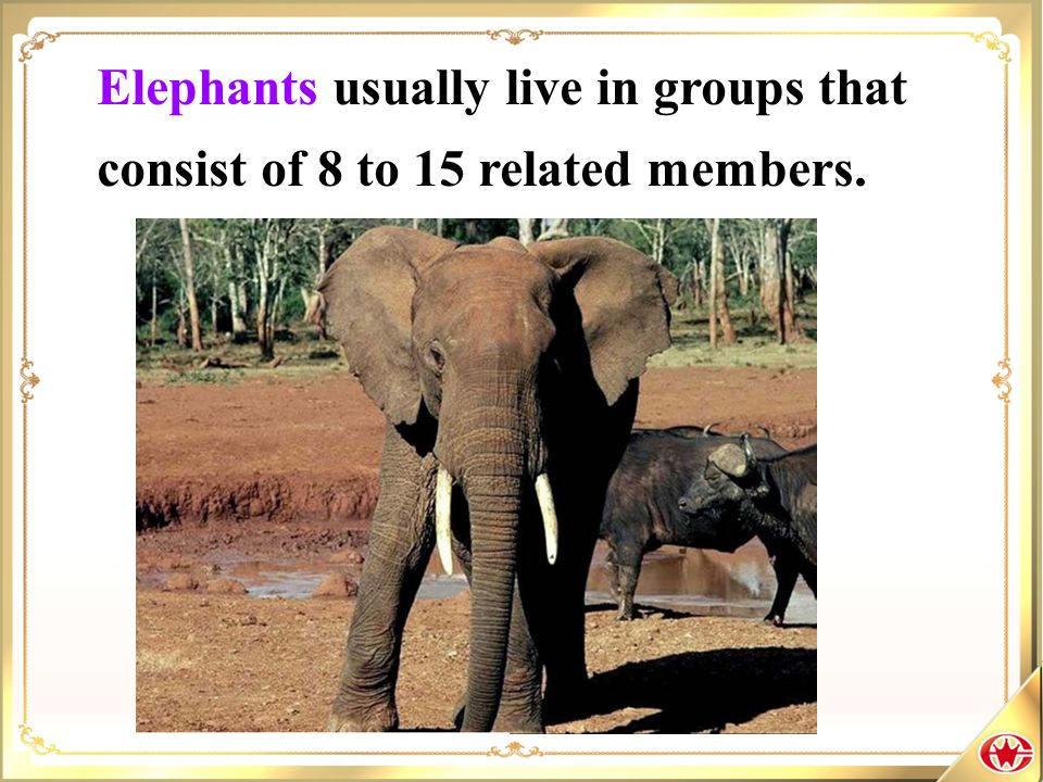 Elephants usually live in groups that consist of 8 to 15 related members.