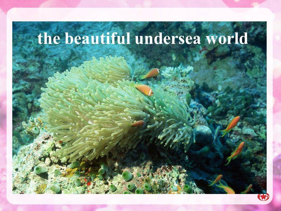 the beautiful undersea world