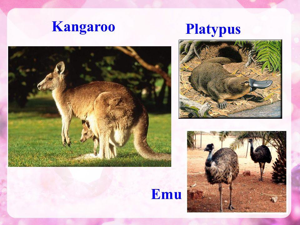 Kangaroo Emu Platypus