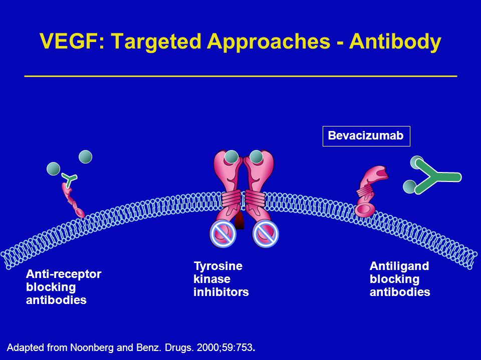 VEGF: Targeted Approaches - Antibody Anti-receptor blocking antibodies Antiligand blocking antibodies Tyrosine kinase inhibitors Adapted from Noonberg and Benz.