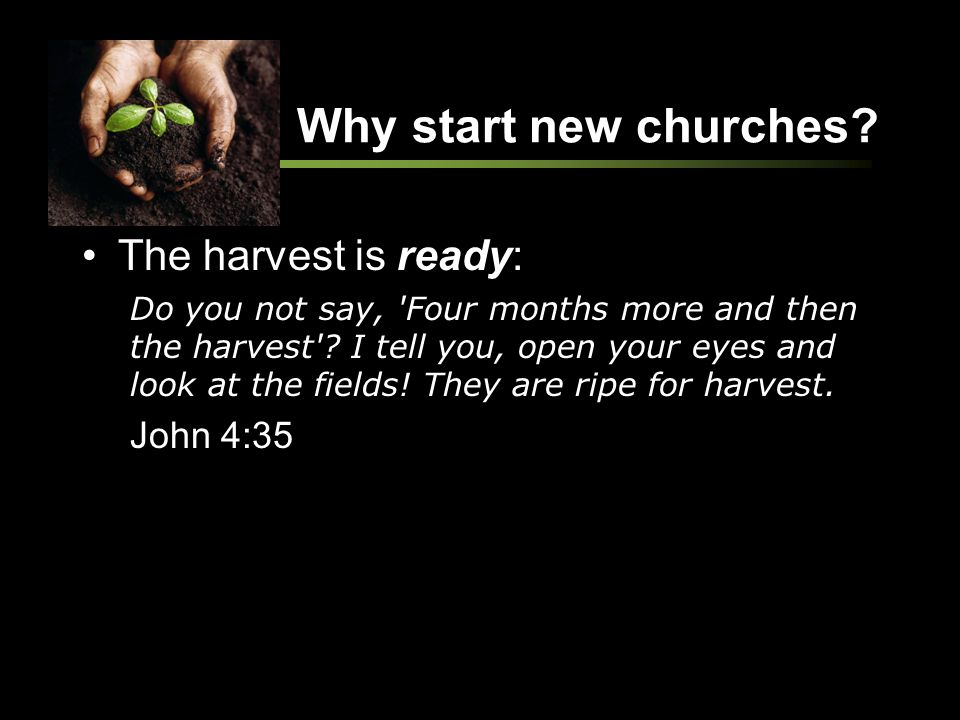Why start new churches? The harvest is ready: Do you not say, 'Four months more and then the harvest'? I tell you, open your eyes and look at the fiel