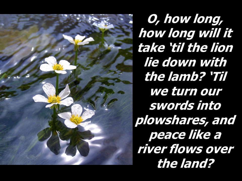 O, how long, how long will it take til the lion lie down with the lamb? Til we turn our swords into plowshares, and peace like a river flows over the