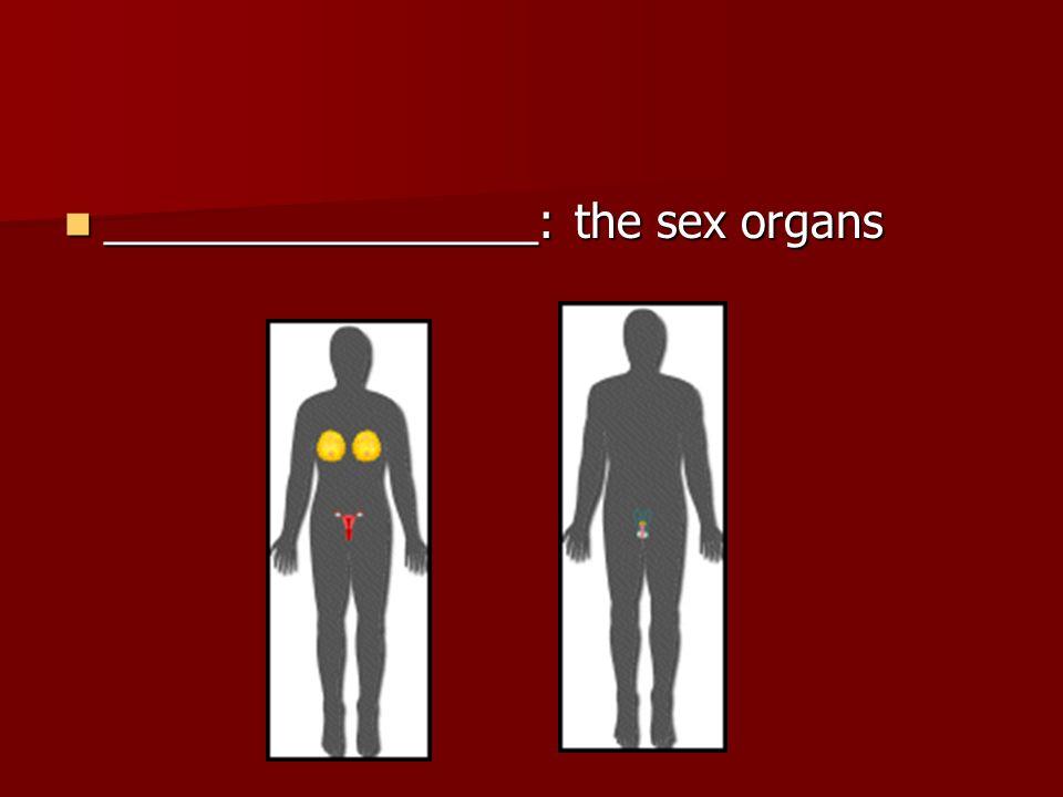 _________________: the sex organs _________________: the sex organs