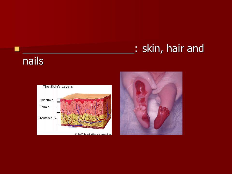 ____________________: skin, hair and nails ____________________: skin, hair and nails