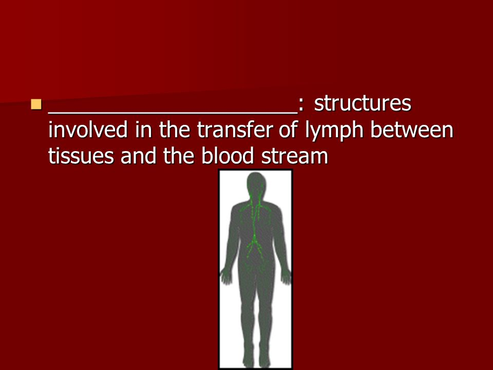 _____________________: structures involved in the transfer of lymph between tissues and the blood stream _____________________: structures involved in