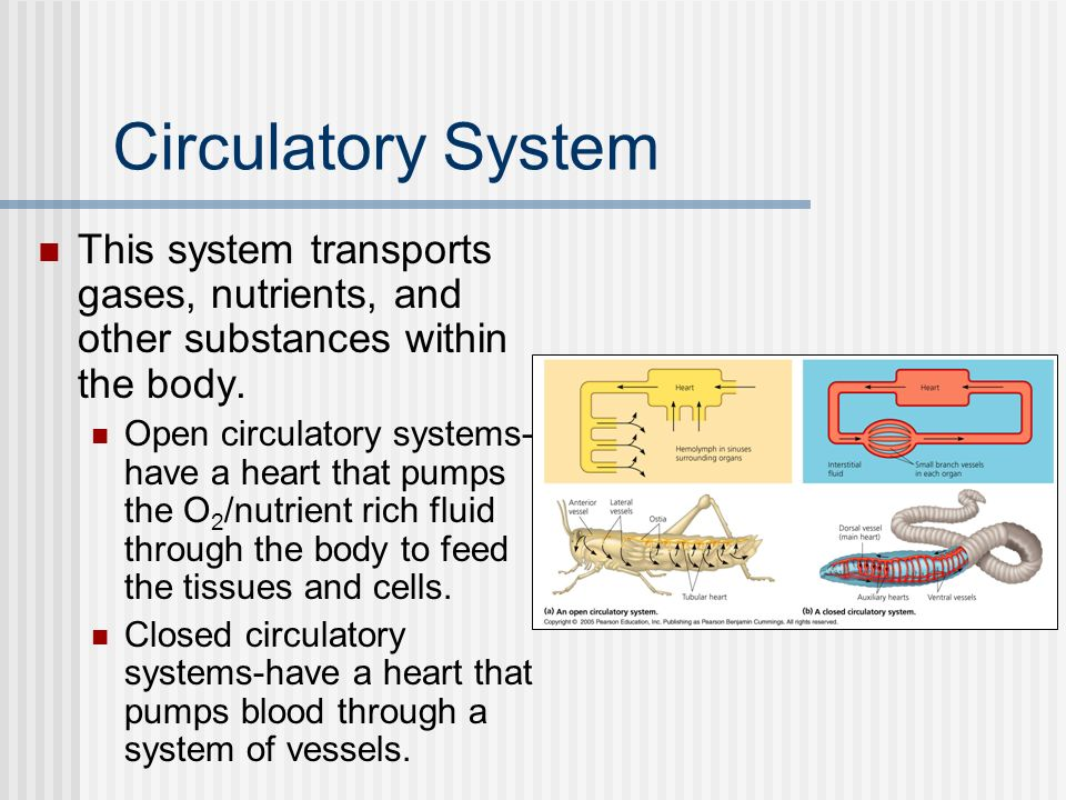 Circulatory System This system transports gases, nutrients, and other substances within the body. Open circulatory systems- have a heart that pumps th