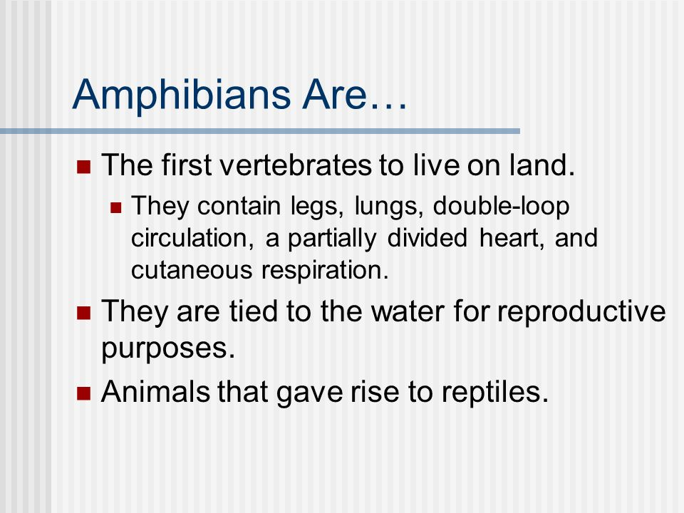 Amphibians Are… The first vertebrates to live on land.