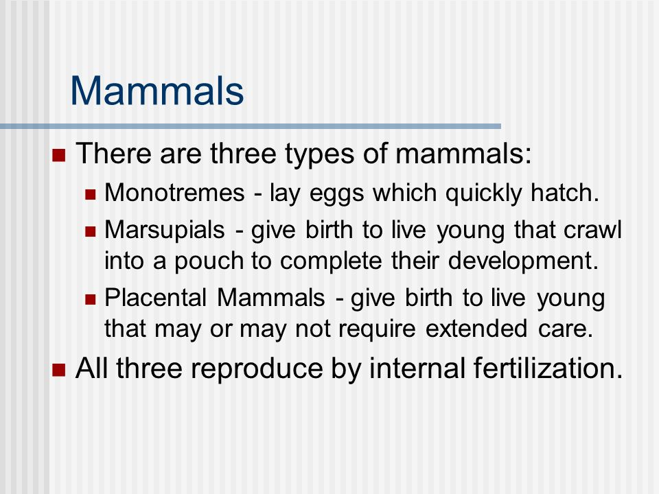 Mammals There are three types of mammals: Monotremes - lay eggs which quickly hatch.