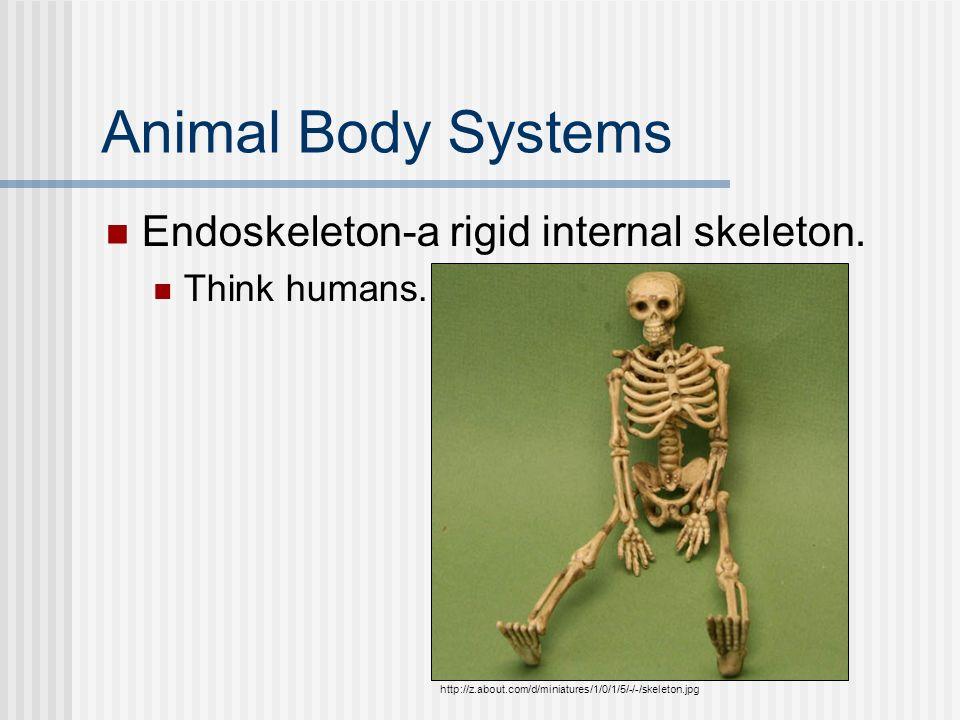 Animal Body Systems Endoskeleton-a rigid internal skeleton.