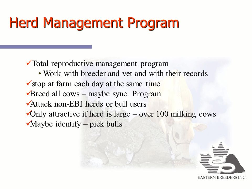 Herd Management Program Total reproductive management program Work with breeder and vet and with their records stop at farm each day at the same time Breed all cows – maybe sync.
