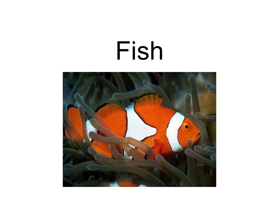 Cleaning: Some tropical fish are cleaners.They pick parasites from other fish.