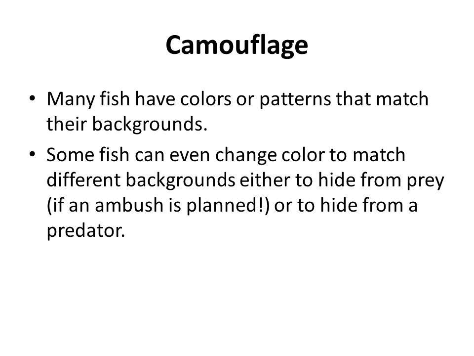 Camouflage Many fish have colors or patterns that match their backgrounds. Some fish can even change color to match different backgrounds either to hi