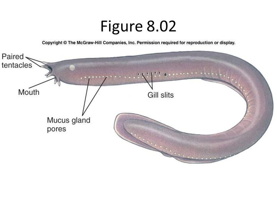 Figure 8.02